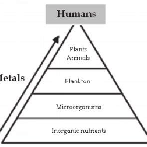 Literature review of biosorption of heavy metals